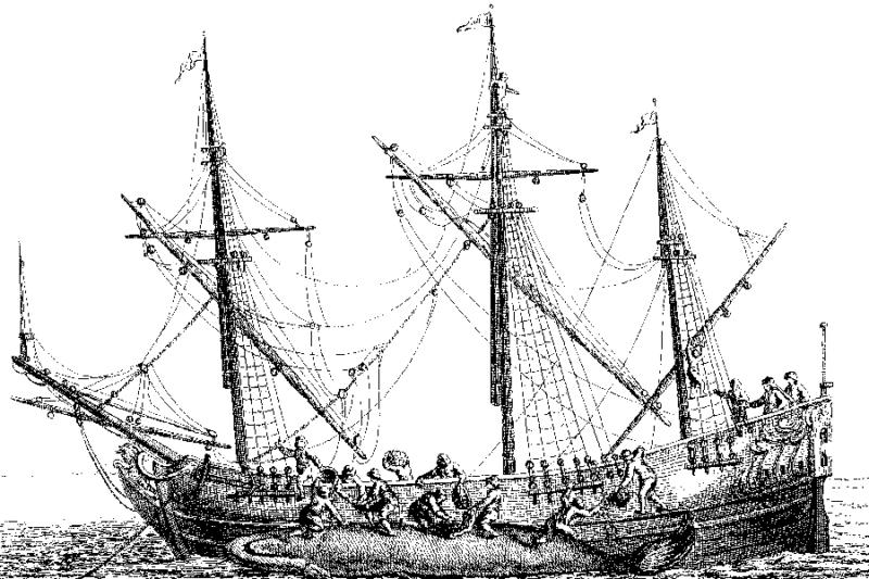 découpage dépeçage baleine labrador canada