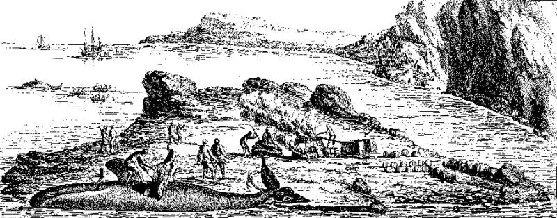 dépeçage baleine Duhamel du monceau Labrador