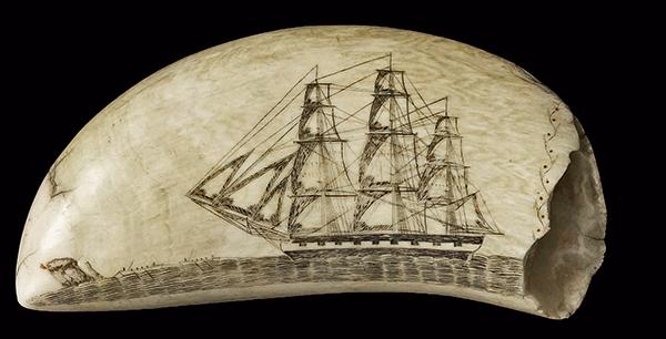 ivoire os art scrimshaw