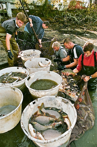 pêche d'étang sologne perches