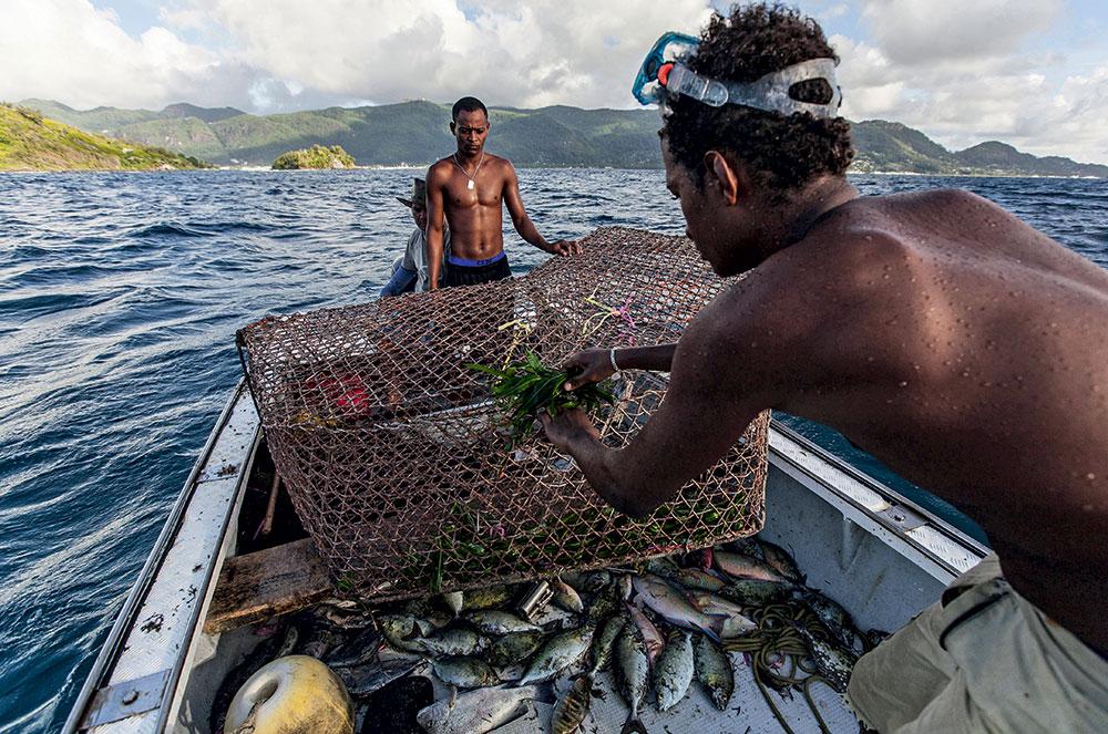 Seychelles, Pêche, thoniers, espadon