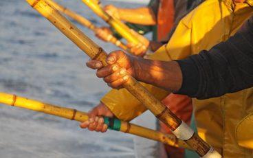 Pêche Açores, canneurs Açores, Thon pêche Açores, bateaux Açores