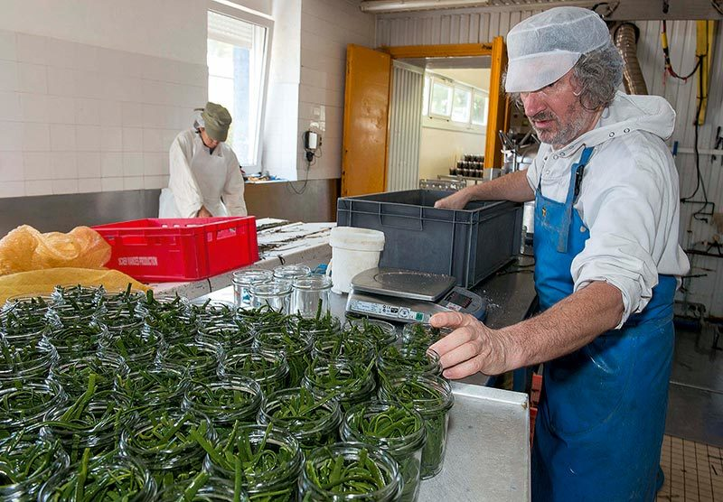 algues alimentaire, article algues alimentaire, chasse-maree