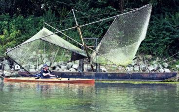 Pêche Alose, Alose Garonne, pêche Garonne, Alosa alosa