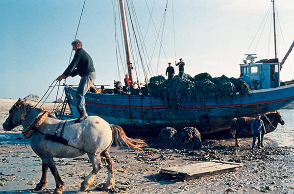 Déchargement d'un bateau à cheval