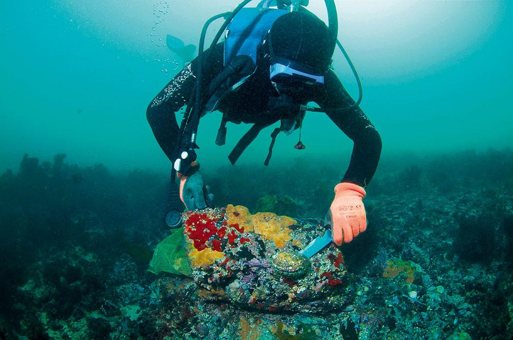 plongeur pechant un ormeau