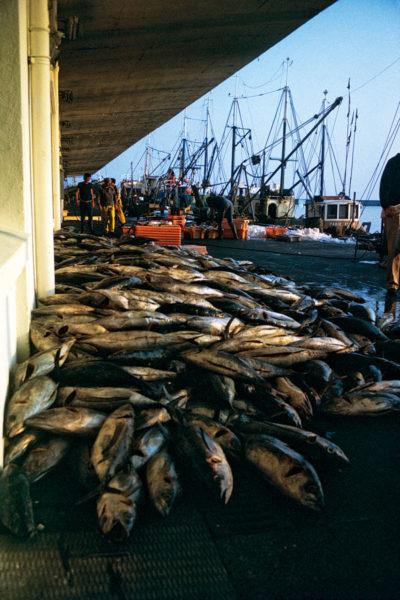 Pêche au thon, Douarnenez, Malamok Douarnenez