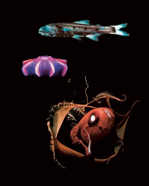 Dans les bancs de poissons lanternes