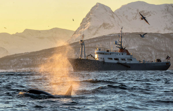 Polarfront sillonne les eaux norvégiennes tout au long de l'année, hors arrêts techniques de maintenance.