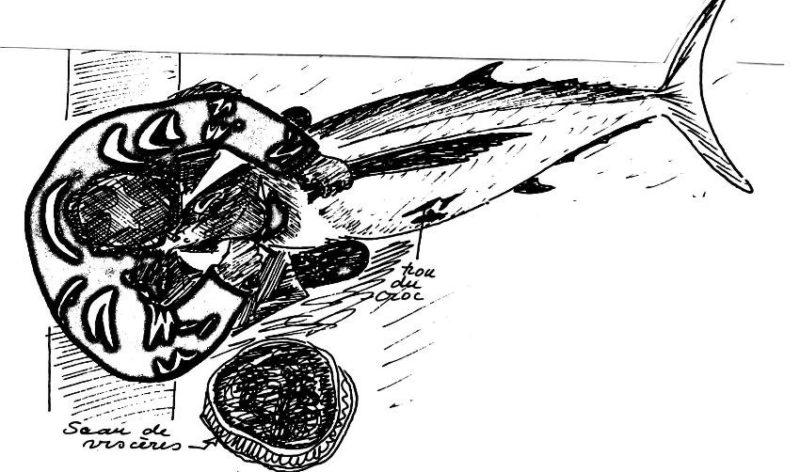 La pêche au thon germon