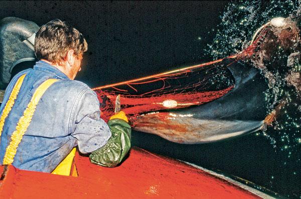 Un pêcheur tente de libérer le dauphin, encore vivant.