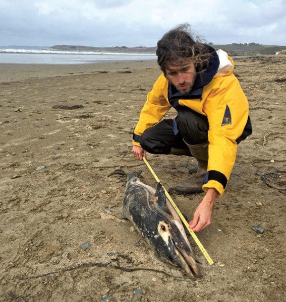 En 2019, sur la plage de Saint-Anne-la-Palud, dans le Finistère, examen externe d'un dauphin commun (Delphinus delphis) échoué par Arthur Alt