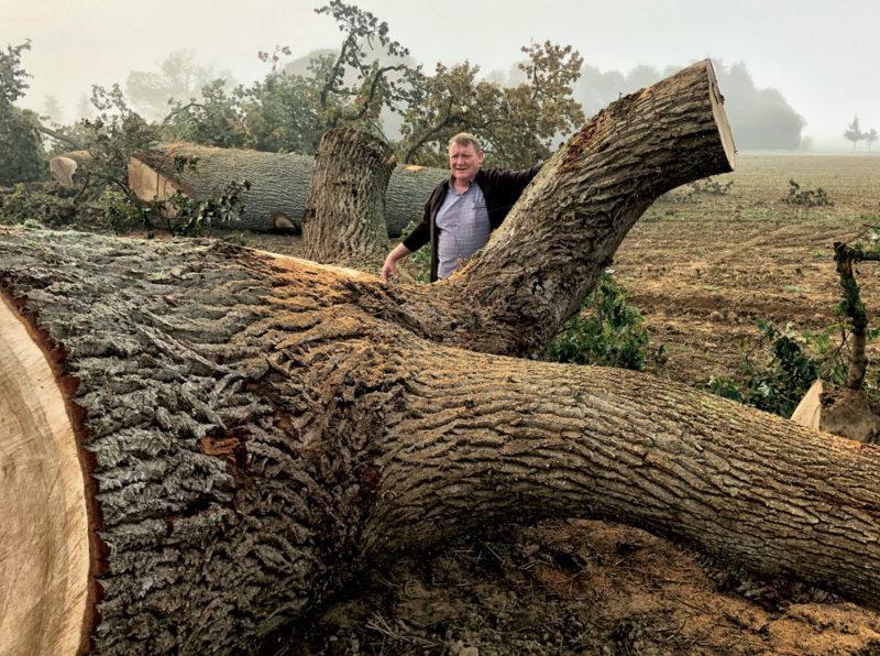 Spécialiste du bois de marine, Thierry Juliot parcourt la France à la recherche des meilleurs arbres
